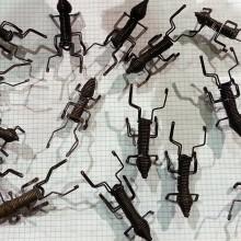 Hormigas de reciclaje