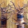Baobab de Hoja de banano